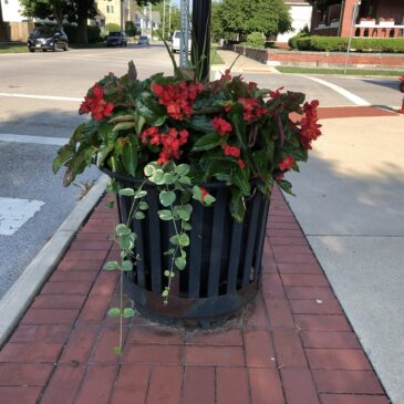 Downtown Piqua beautification efforts receive extraordinary support.