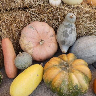 Downtown Pumpkin Patch to benefit Bethany Center